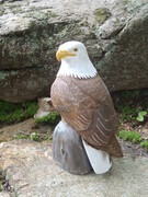 Miniature Bald Eagle